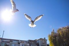 Voo de dois pássaros no céu Imagens de Stock