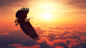 Voo de Eagle de peixes acima das nuvens Fotografia de Stock Royalty Free