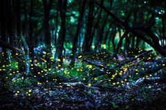 Voo de Frireflies na floresta no crepúsculo imagens de stock royalty free