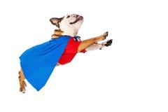 Voo do cão do super-herói fotografia de stock royalty free