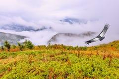 Voo do condor acima da paisagem nebulosa da montanha Foto de Stock Royalty Free