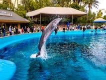 Voo do golfinho no ar imagens de stock royalty free