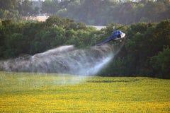 Voo do helicóptero do trabalho agrícola o baixo que pulveriza acima dos girassóis coloca Imagem de Stock