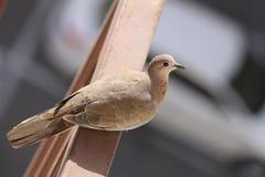 Voo do pássaro com livre imagens de stock royalty free