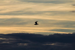 Voo do pássaro contra o céu bonito Imagens de Stock