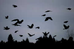 Voo do pássaro no crepúsculo Imagens de Stock