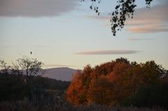 Voo do pássaro sobre árvores do outono fotografia de stock royalty free
