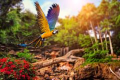 Voo do papagaio Imagens de Stock
