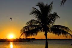 Voo do por do sol Imagem de Stock
