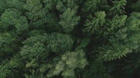 Voo do zangão sobre a floresta filme