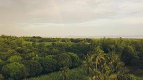 Voo do zangão sobre o jardim da manga e a plantação do fruto na vila asiática Jardim tropical da paisagem aérea com árvores de fr vídeos de arquivo