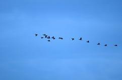 Voo dos pássaros Foto de Stock Royalty Free