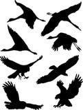 Voo dos pássaros Imagem de Stock Royalty Free