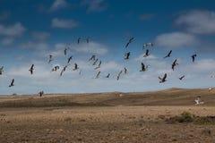 Voo dos pássaros na paisagem natural Foto de Stock