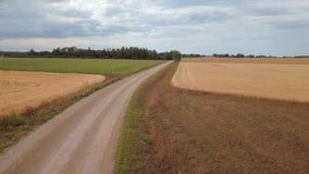 Voo lentamente sobre uma estrada rural entre campos de trigo maduros dourados do cereal video estoque
