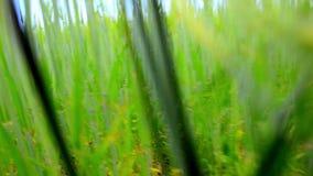 Voo lento sobre o campo verde perto da floresta dentro video estoque