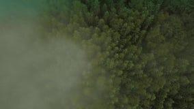 Voo místico e nevoento do zangão sobre a floresta úmida na montanha Mosca acima da parte superior da névoa abaixo da vista vídeos de arquivo