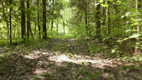 Voo no tiro constante liso e rápido da floresta da came Dia limpo e brilhante video estoque