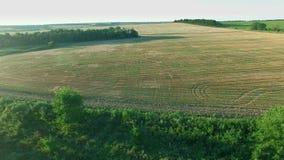 Voo a Quadrocopters sobre campos no por do sol filme
