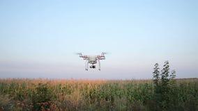 Voo Quadrocopters sobre o campo de milho filme