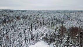 Voo rapidamente acima da grande floresta no inverno frio filme