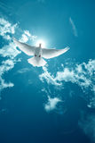 Voo santamente branco da pomba na imagem do vertical do céu foto de stock royalty free