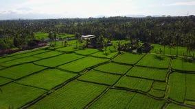 Voo sobre campos do arroz filme