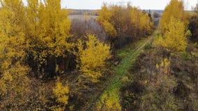 Voo sobre a estrada de ferro que passa com o outono da floresta Silhueta do homem de negócio Cowering A câmera vai acima 4K vídeos de arquivo