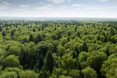 Voo sobre a floresta foto de stock royalty free