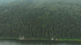 Voo sobre a floresta do abeto vermelho vídeos de arquivo