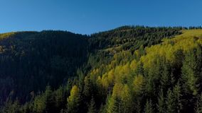 Voo sobre a floresta e a casa dos pastores nos Carpathians video estoque