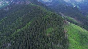 Voo sobre a floresta nas montanhas vídeos de arquivo