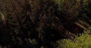 Voo sobre Forest Forest de cima de filme
