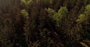 Voo sobre Forest Forest de cima de vídeos de arquivo