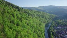 Voo sobre a montanha bonita de Carpathians do ucraniano e a floresta conífera que negligenciam o verde luxúria bonito filme