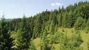 Voo sobre montanhas arborizadas Vídeo aéreo video estoque