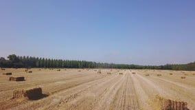 Voo sobre o campo bonito com o pacote do feno Metragem aérea 4k do zangão filme