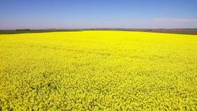 Voo sobre o campo com as flores de florescência do Canola Metragem aérea foto de stock