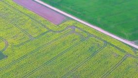 Voo sobre o campo com as flores e a estrada secund?ria de floresc?ncia do Canola Metragem a?rea de Dron filme
