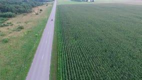 Voo sobre o campo de milho perto do velomotor da estrada filme