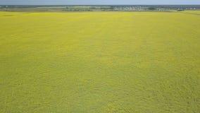 Voo sobre o campo verde com flores amarelas video estoque
