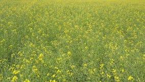 Voo sobre o campo verde com flores amarelas filme