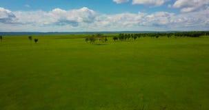 Voo sobre o quadcopter sobre um prado verde filme