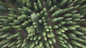 Voo sobre um pinho verde lux?ria vasto e partes superiores da ?rvore do abeto vermelho na opini?o a?rea da floresta vídeos de arquivo