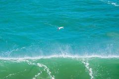 Voo solitário do albatroz foto de stock