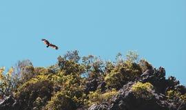 voo vermelho do falcão sobre o céu imagens de stock royalty free