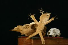 voodoo черепов животной куклы книги старый Стоковая Фотография RF