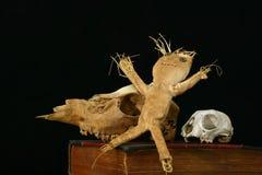 Voodoo los cráneos de la muñeca y del animal en un libro viejo Fotografía de archivo libre de regalías