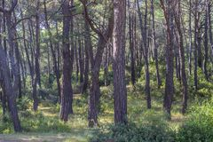 Voor breed geschoten bos onder middaglicht stock foto's