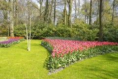 Voor de bomen en de struiken zijn bloembedden met tulpen in diverse kleuren stock foto